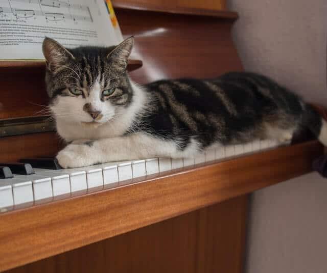 Cat on piano keys