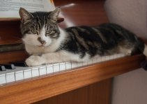 Cat Atop Piano